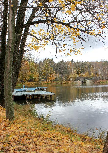 Заглянула осень в пруд